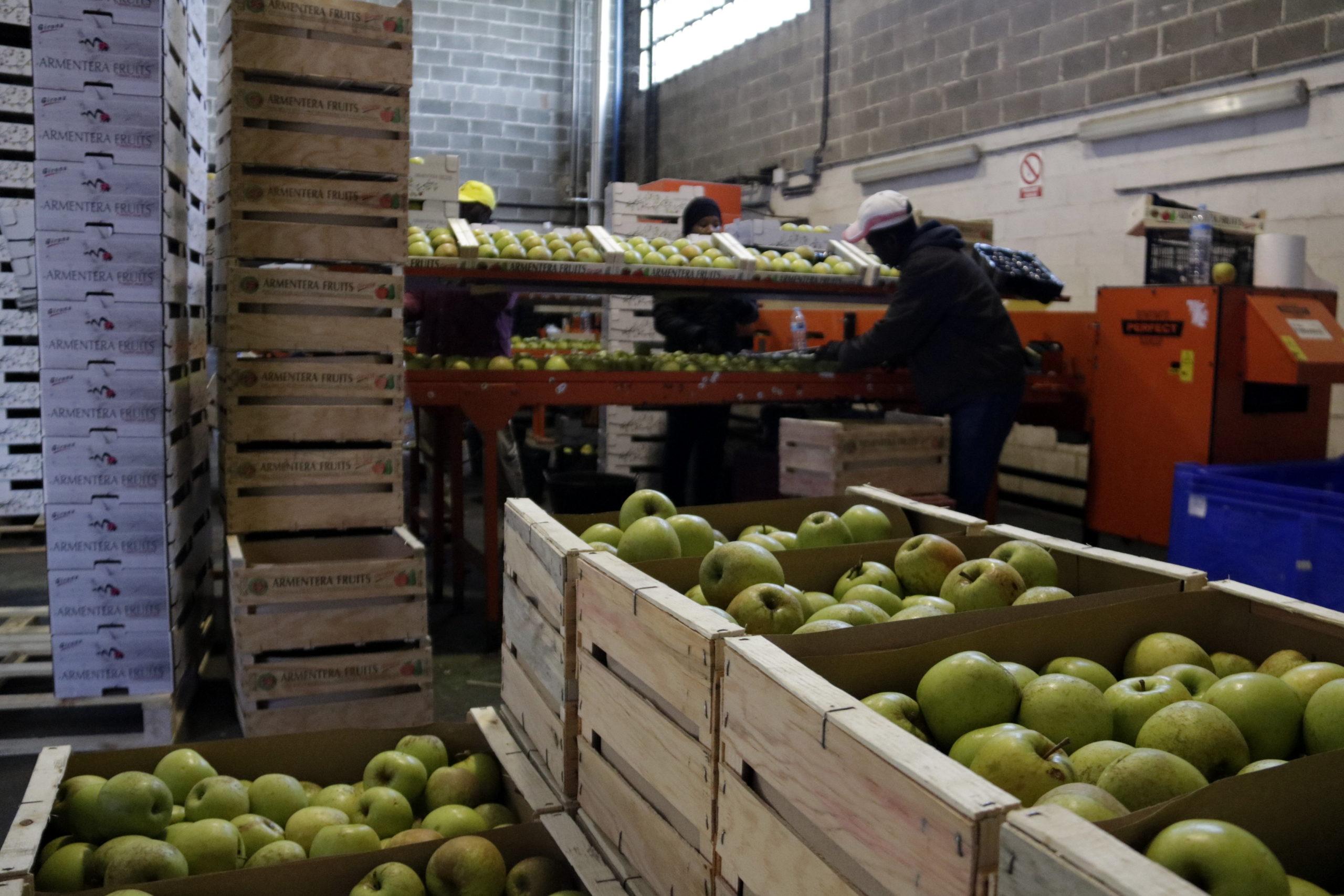 Treballadors preparant caixes de pomes per proveir el mercat   ACN