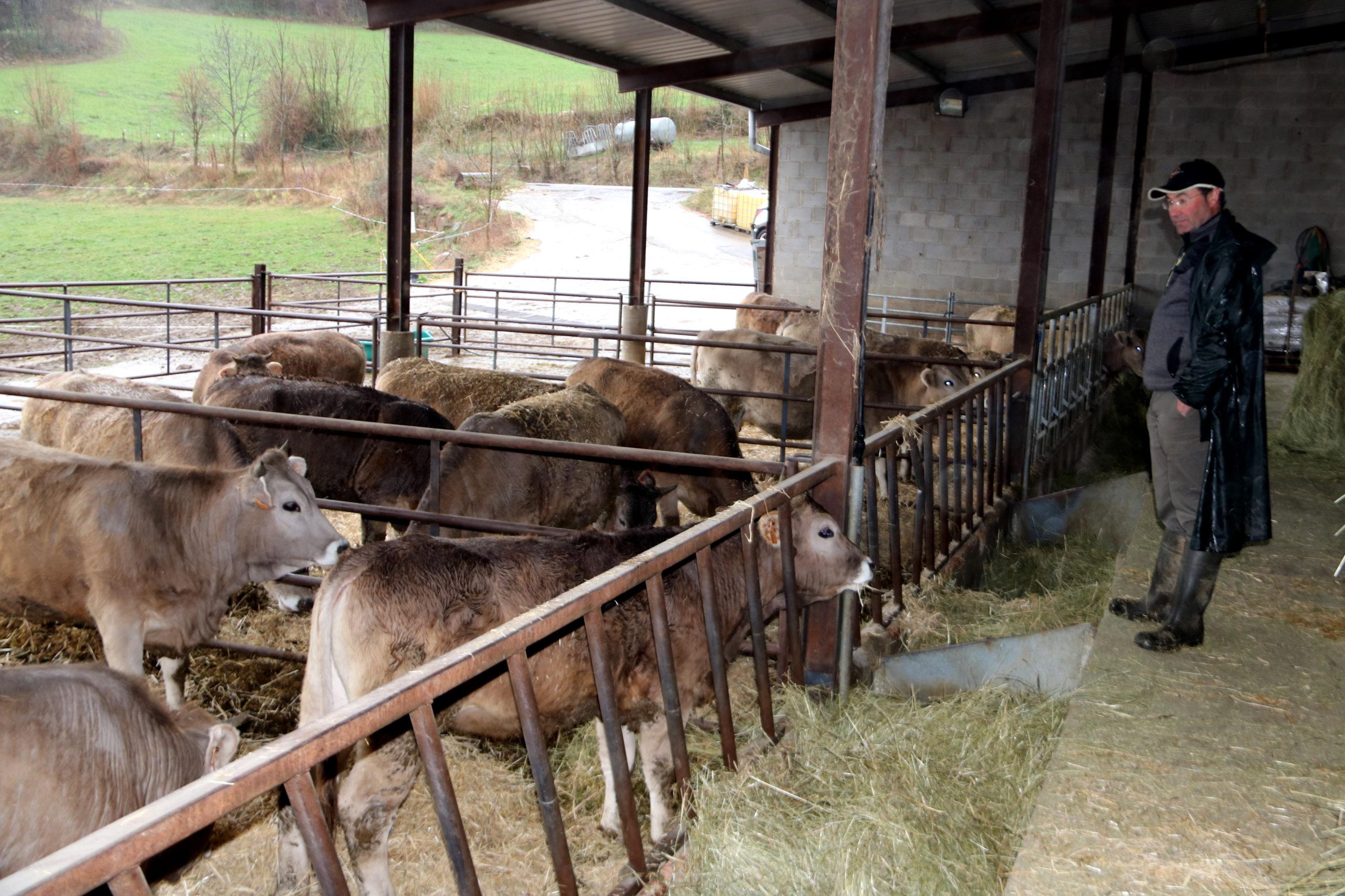 Un ramader en una granja de vaques | ACN