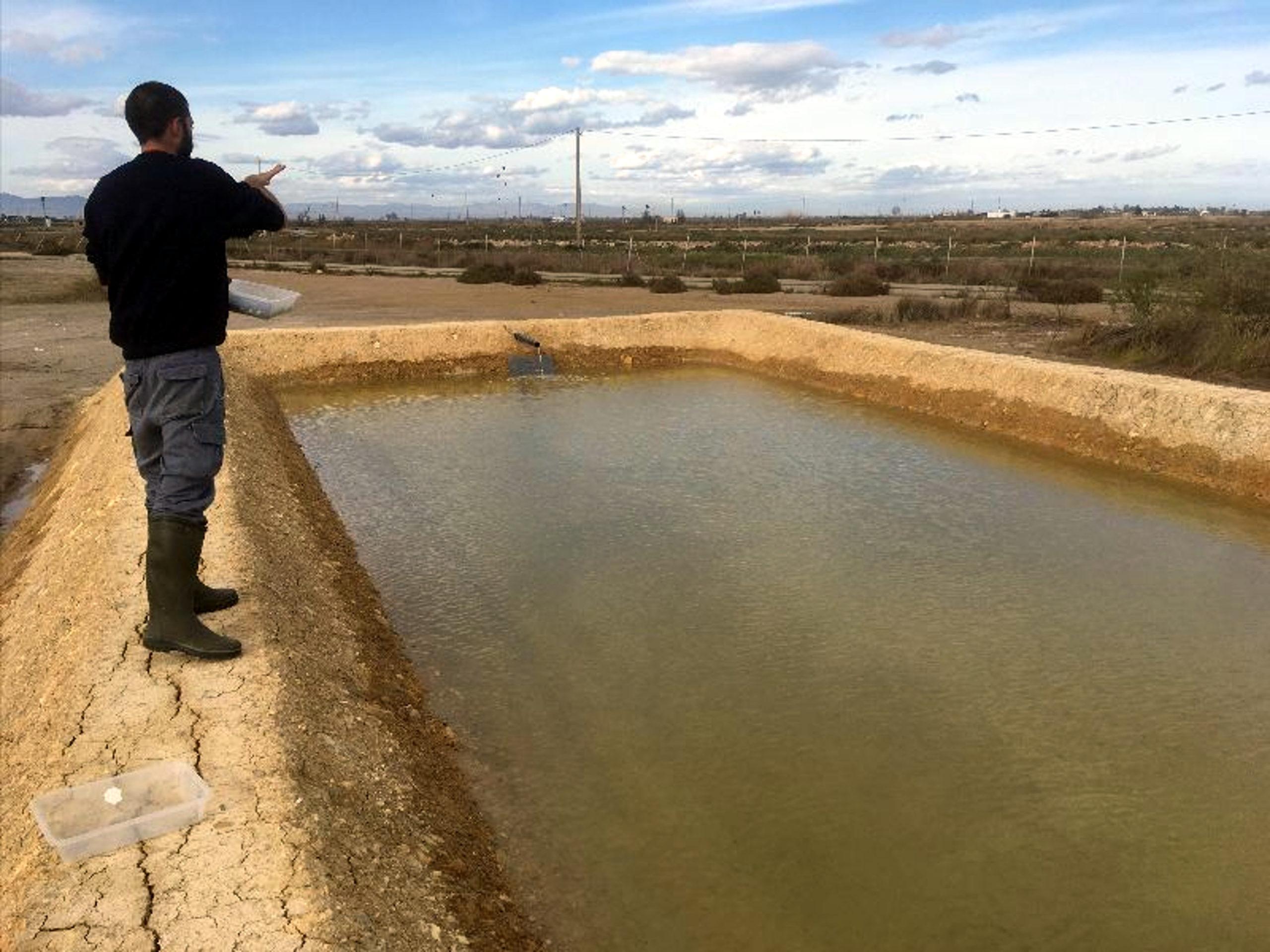 Un dels investigadors de l'IRTA fent proves en una de les basses de terra que s'han preparat per al projecte Fitogel | ACN