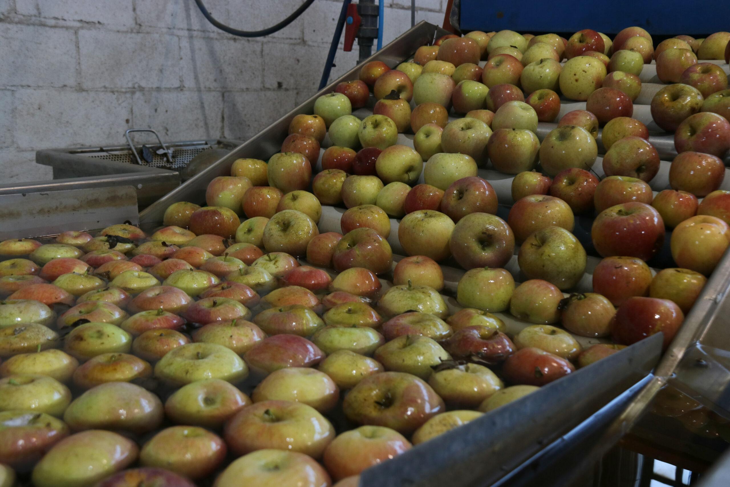 Nombroses pomes   ACN