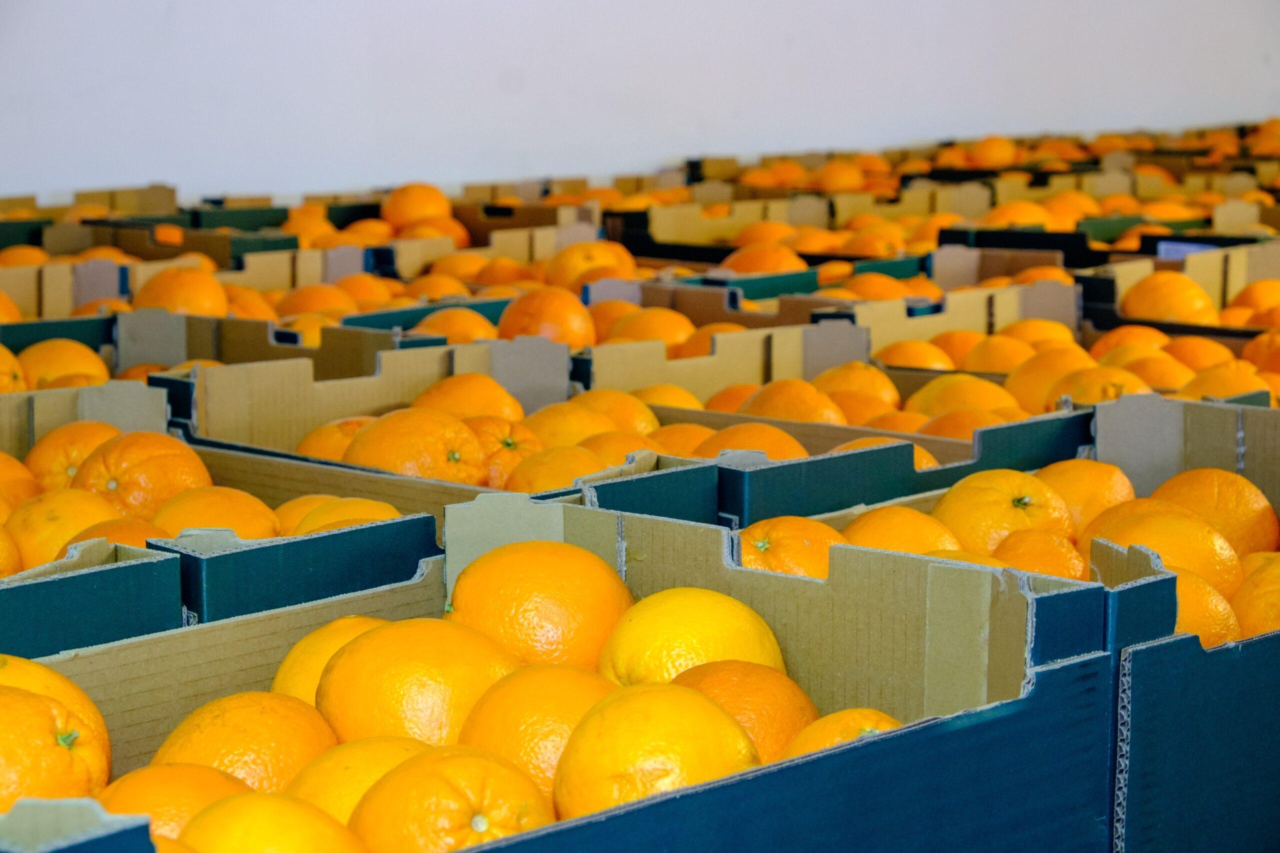 Taronges donades pel Departament d'Agricultura al Banc dels Aliments   Departament d'Agricultura