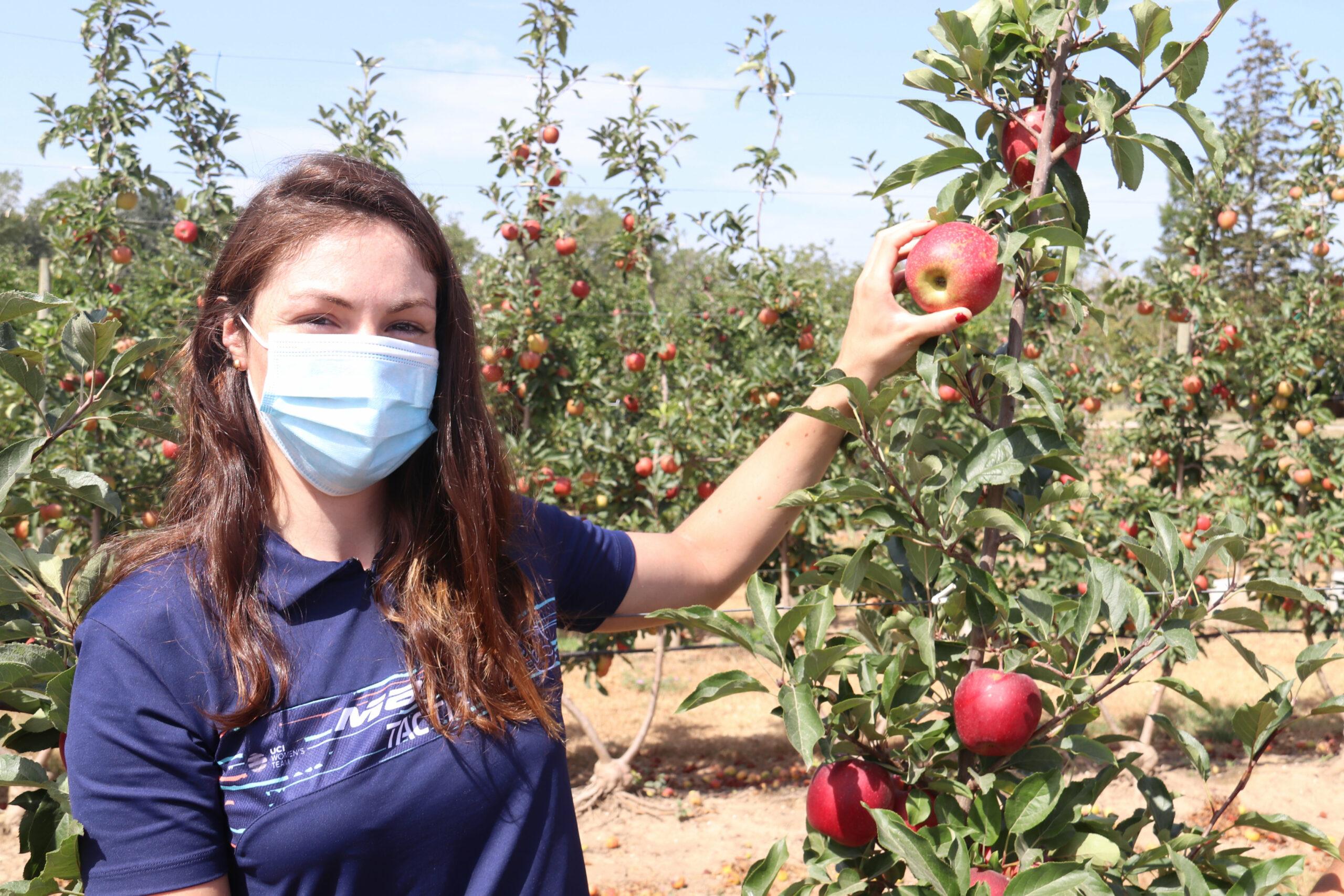 Una de les ciclistes de l'equip femení de ciclisme Massi Tactic, Ariadna Trias, recollint la primera poma de la IGP Poma de Girona    ACN