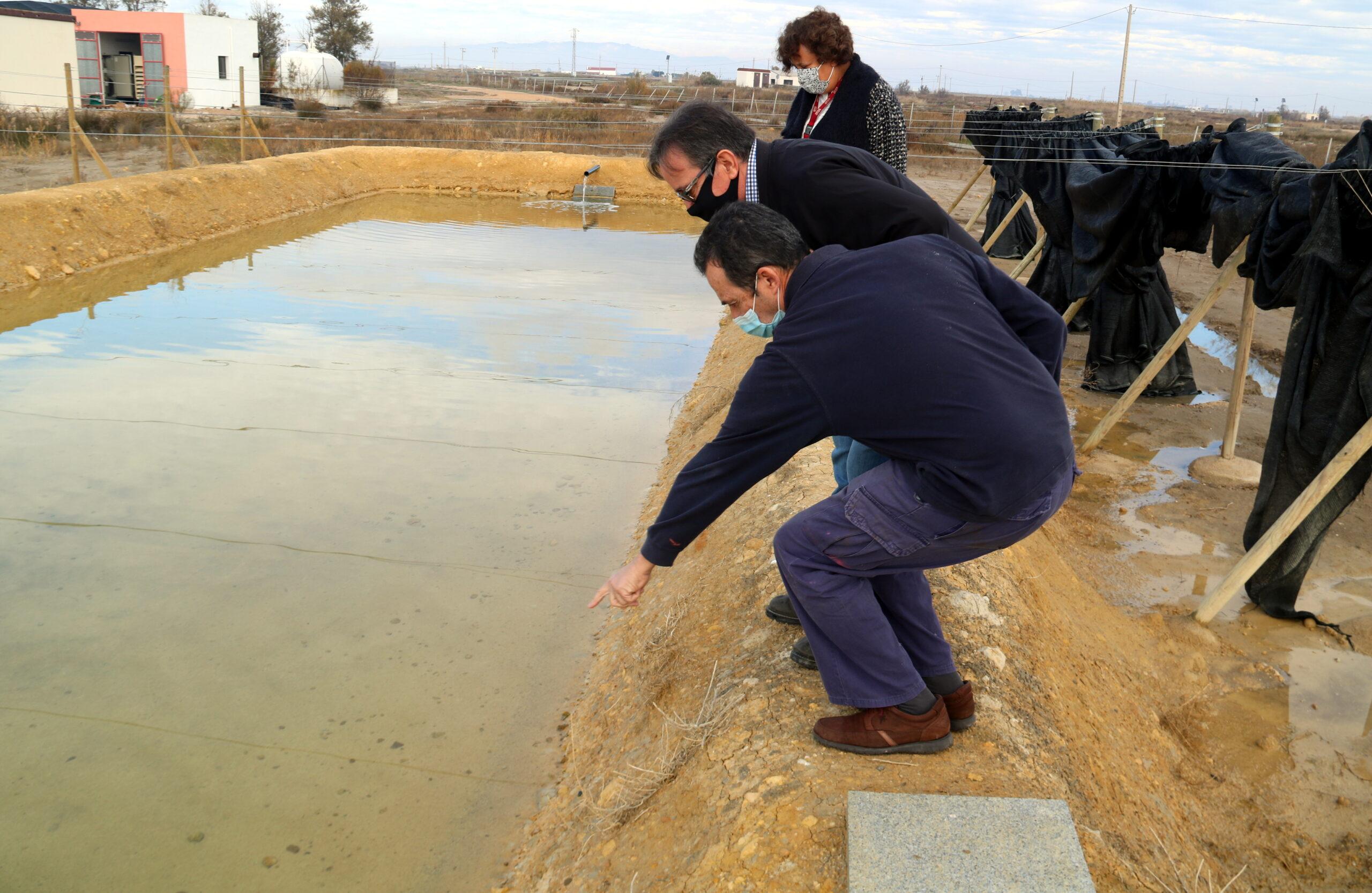 El gerent de FEPROMODEL, Gerardo Bonet, visitant el camp experimental de cultiu de cloïsses de l'IRTA amb dos investigadors del projecte Fitogel | ACN