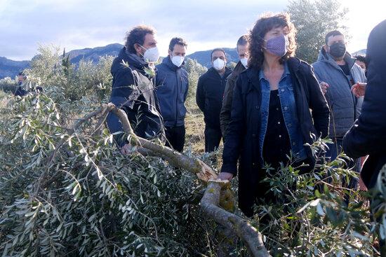 La consellera d'Agricultura, Teresa Jordà, al costat d'una olivera jove trencada pel pes de la neu durant una visita a una finca d'oliveres d'Horta de Sant Joan, a la Terra Alta   ACN