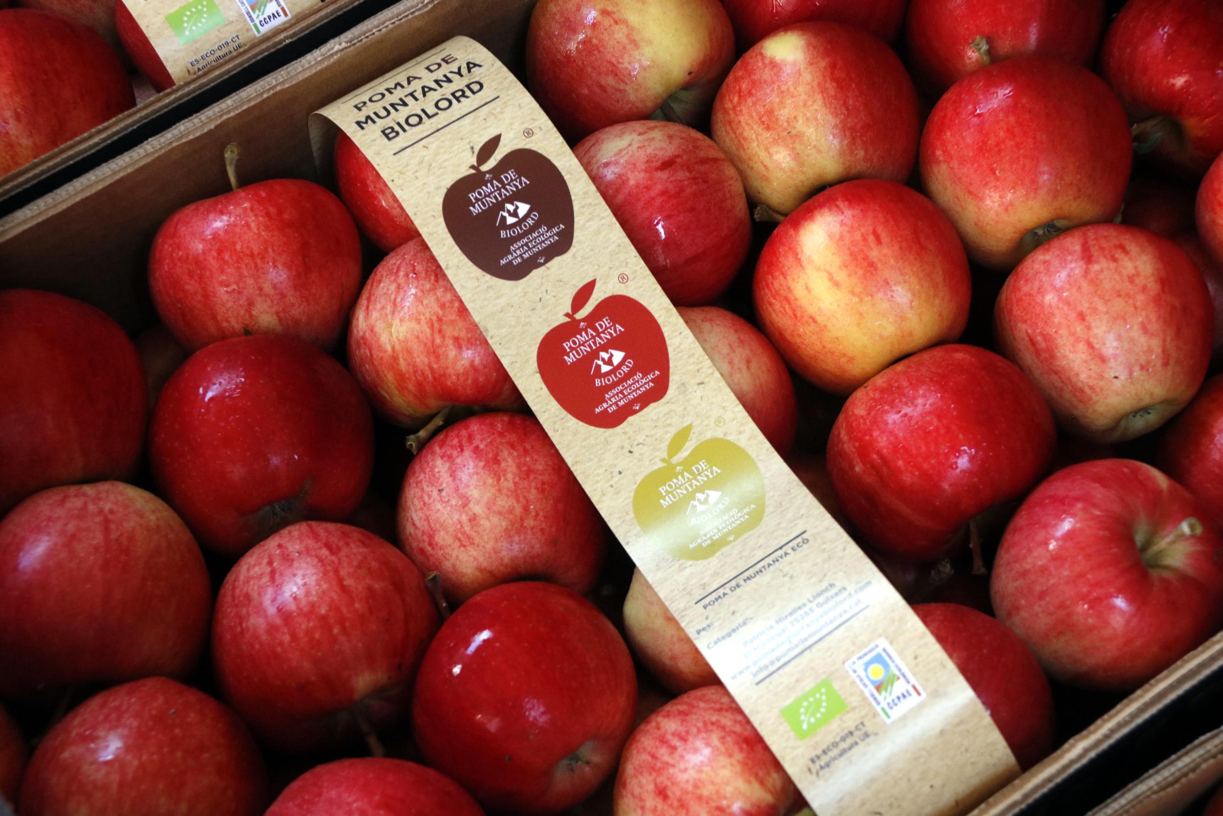 Una caixa plena de pomes ecològiques de muntanya amb el segell de producció ecològica   ACN